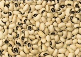 Black-eyed peas, Cowpeas, Niebe
